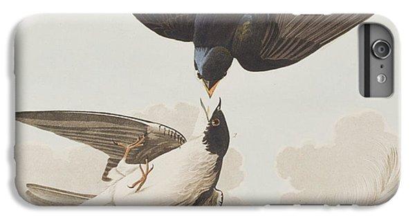 White-bellied Swallow IPhone 7 Plus Case by John James Audubon