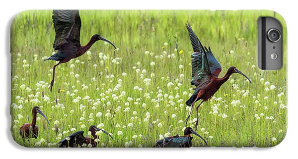 White-faced Ibis Rising, No. 1 IPhone 7 Plus Case