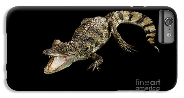 Young Cayman Crocodile, Reptile With Opened Mouth And Waved Tail Isolated On Black Background In Top IPhone 7 Plus Case by Sergey Taran