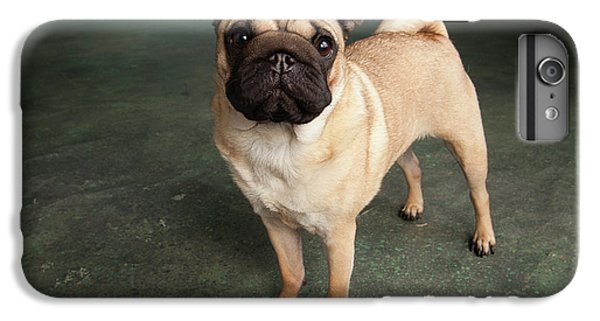 Pug iPhone 7 Plus Case - Portrait Of A Pug Mixed Dog by Panoramic Images