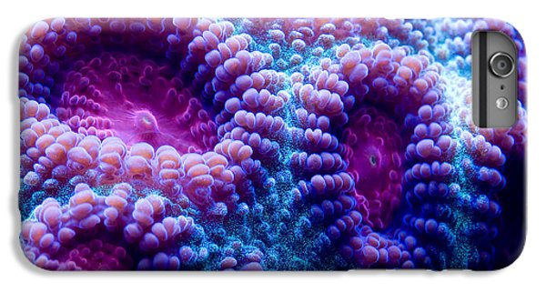 Marine iPhone 7 Plus Case - This Is A Macro Photograph Of A Purple by Tyler Fox