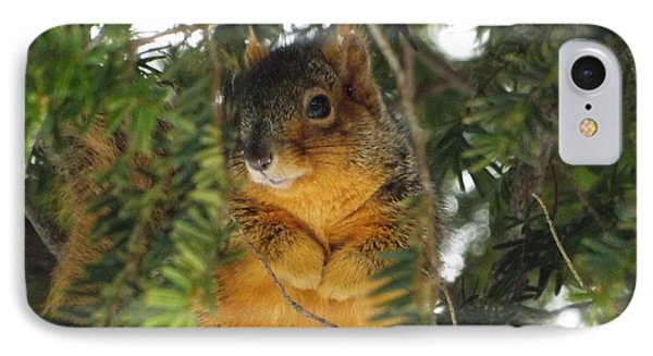 Fox Squirrel IPhone Case