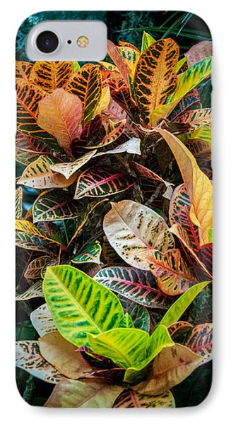 Variegated Plants IPhone Case