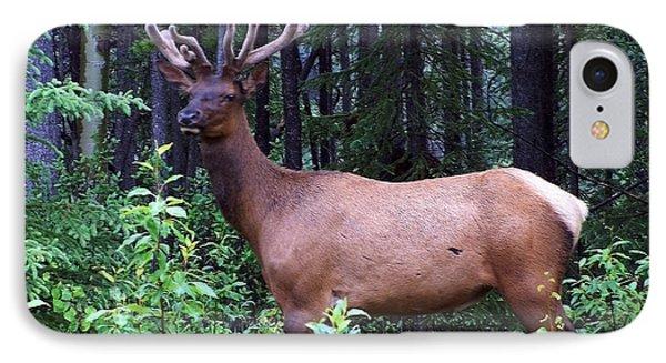 062505 Elk In Velvet IPhone Case