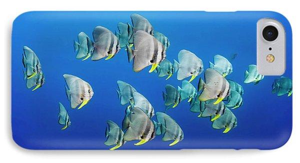 A Small School Of Batfish Swim In Kimbe IPhone Case