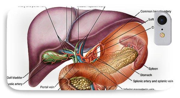 Superior Mesenteric Artery iPhone 8 Cases | Fine Art America
