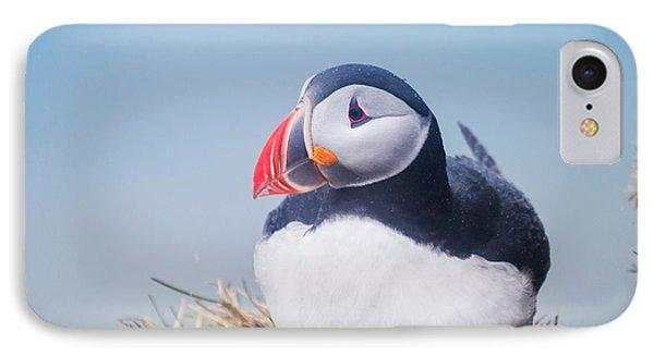 Atlantic Puffin Fratercula Arctica IPhone Case