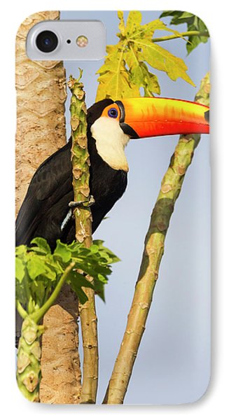 Brazil, Mato Grosso, The Pantanal, Toco IPhone Case