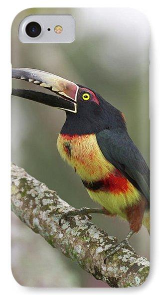 Belize iPhone 8 Case - Collard Aracari (pteroglossus Torquatus by William Sutton