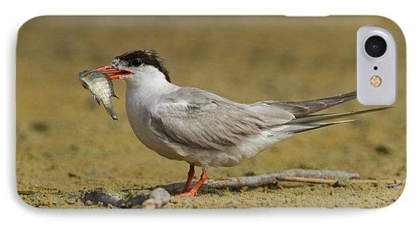Common Tern (sterna Hirundo) IPhone Case