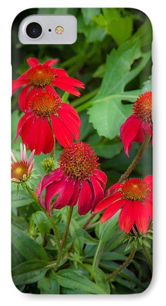 Coneflowers Echinacea Red  IPhone Case