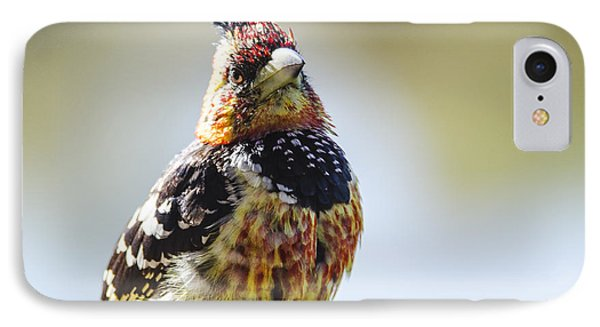 Crested Barbet IPhone Case