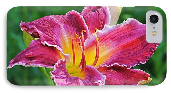 Crimson Day Lily IPhone Case