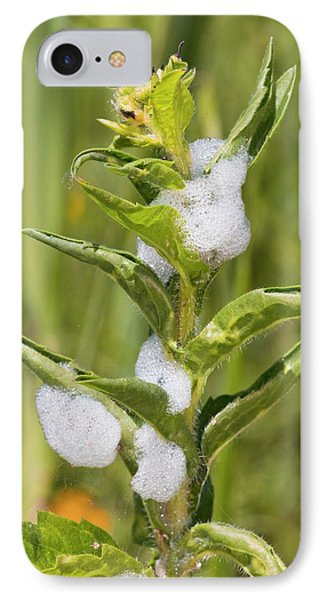 Cuckoo-spit On A Plant IPhone Case