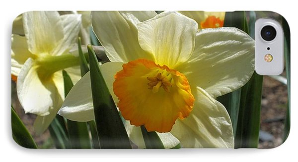 IPhone Case featuring the photograph Daffodil by Gene Cyr