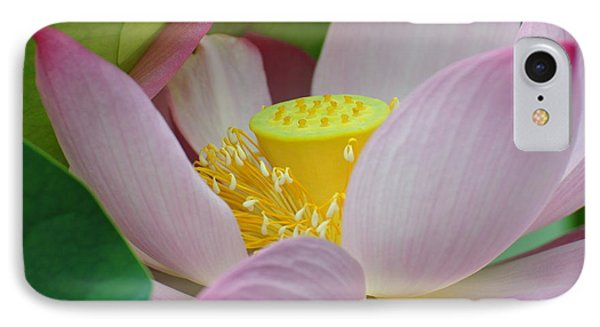 East Indian Lotus IPhone Case
