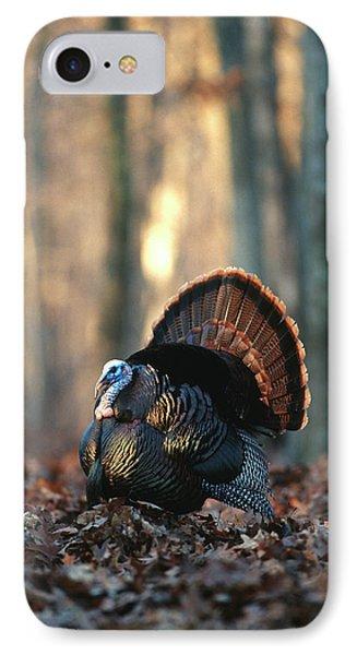 Eastern Wild Turkey (meleagris IPhone Case