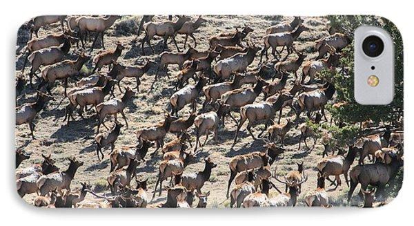 Elk Herd IPhone Case