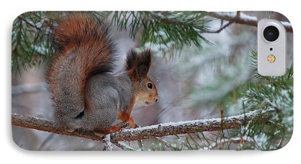 Eurasian Red Squirrel IPhone Case