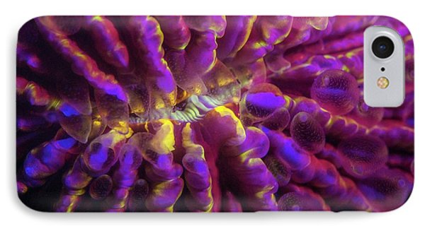 Fluorescence iPhone 8 Case - Fungia Hard Coral Fluorescing At Night by Louise Murray/science Photo Library