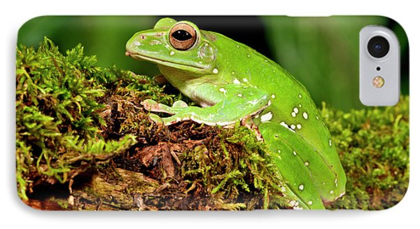 Giant Gliding Treefrog, Polypedates Sp IPhone Case