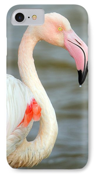 Greater Flamingo Phoenicopterus Roseus IPhone Case