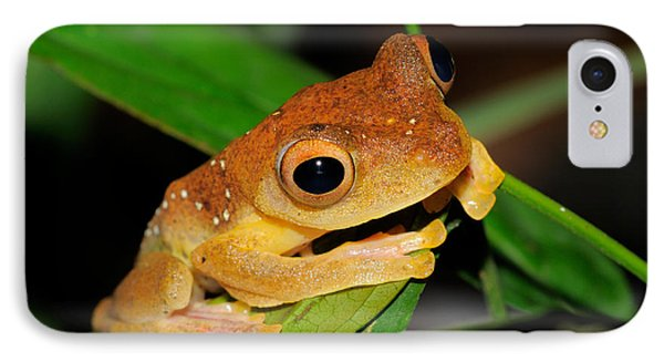 Harlequin Flying Frog, Malaysia IPhone Case