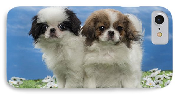 Japanese Chin Puppies IPhone Case