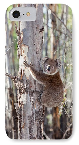 Koala Bear IPhone Case