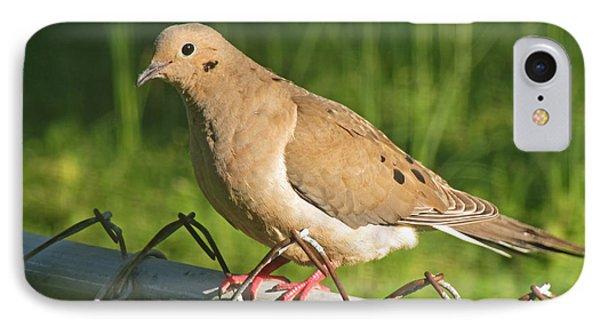 Morning Dove I IPhone Case