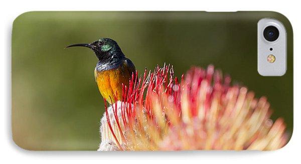 Orange-breasted Sunbird IPhone Case