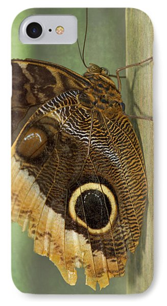 Belize iPhone 8 Case - Owl-eye Butterfly (caligo by William Sutton