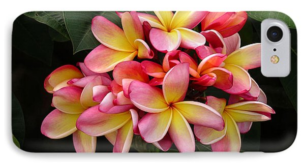 Pink And Yellow Plumeria IPhone Case