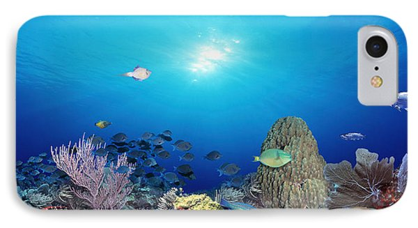 School Of Fish Swimming In The Sea IPhone Case