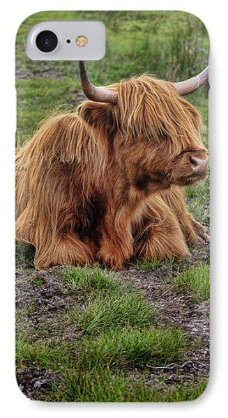 Scottish Highland Cattle IPhone Case