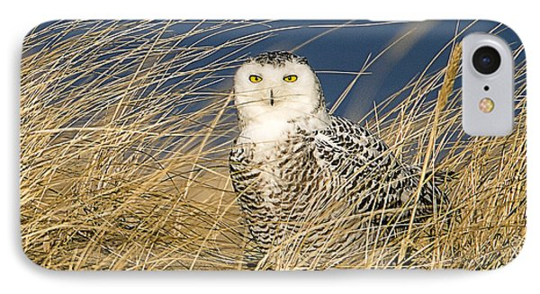 Snowy Owl In The Dunes IPhone Case