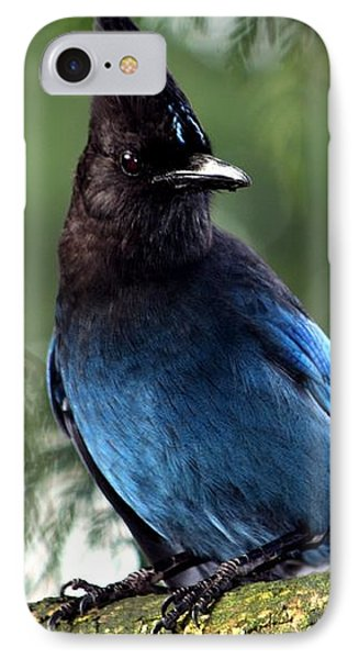 Stellar Jay  IPhone Case