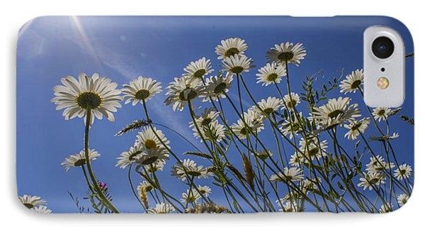 Sun Lit Daisies IPhone Case