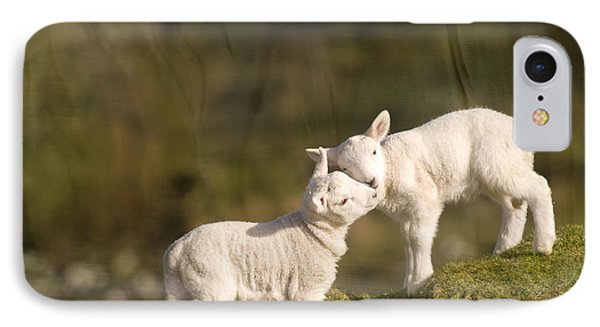 Sheep iPhone 8 Case - Sweet Little Lambs by Angel Ciesniarska
