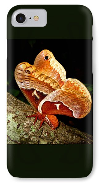 Tuliptree Silkmoth IPhone Case