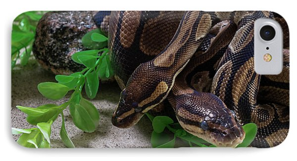 Two Burmese Pythons Python Bivittatus IPhone Case