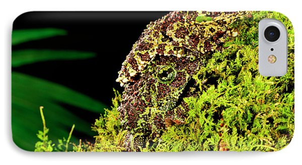 Vietnamese Mossy Frog, Theloderma IPhone Case