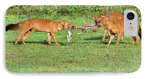 Wild Dogs Playing With A Carcass IPhone Case