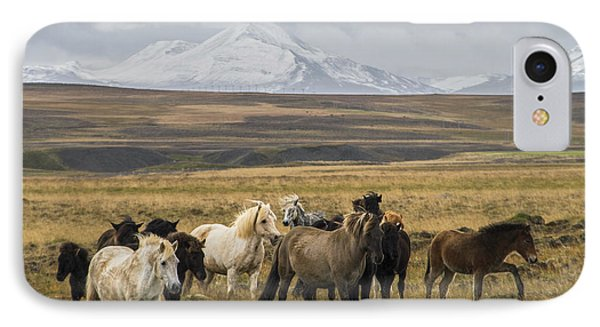 Wild Icelandic Horses IPhone Case