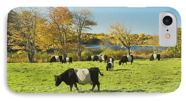 Belted Galloway Cows Grazing On Grass In Rockport Farm Fall Main IPhone Case