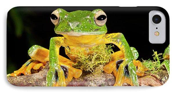 Giant Gliding Treefrog, Polypedates Kio IPhone Case
