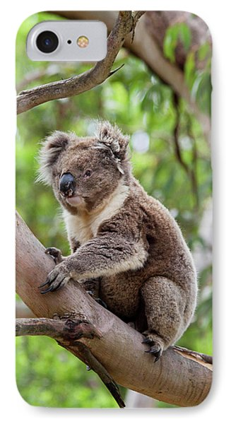 Koala (phascolarctos Cinereus IPhone Case