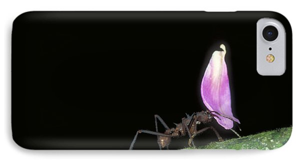 Leafcutter Ant IPhone Case