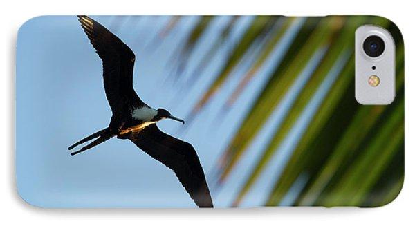 Belize iPhone 8 Case - Magnificent Frigatebird (fregata by Pete Oxford