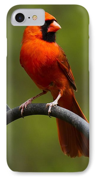 Male Cardinal IPhone Case